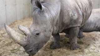 whiterhino-zoo.jpg