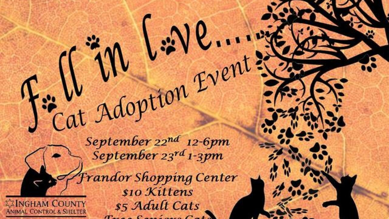 Cat Adoption Event