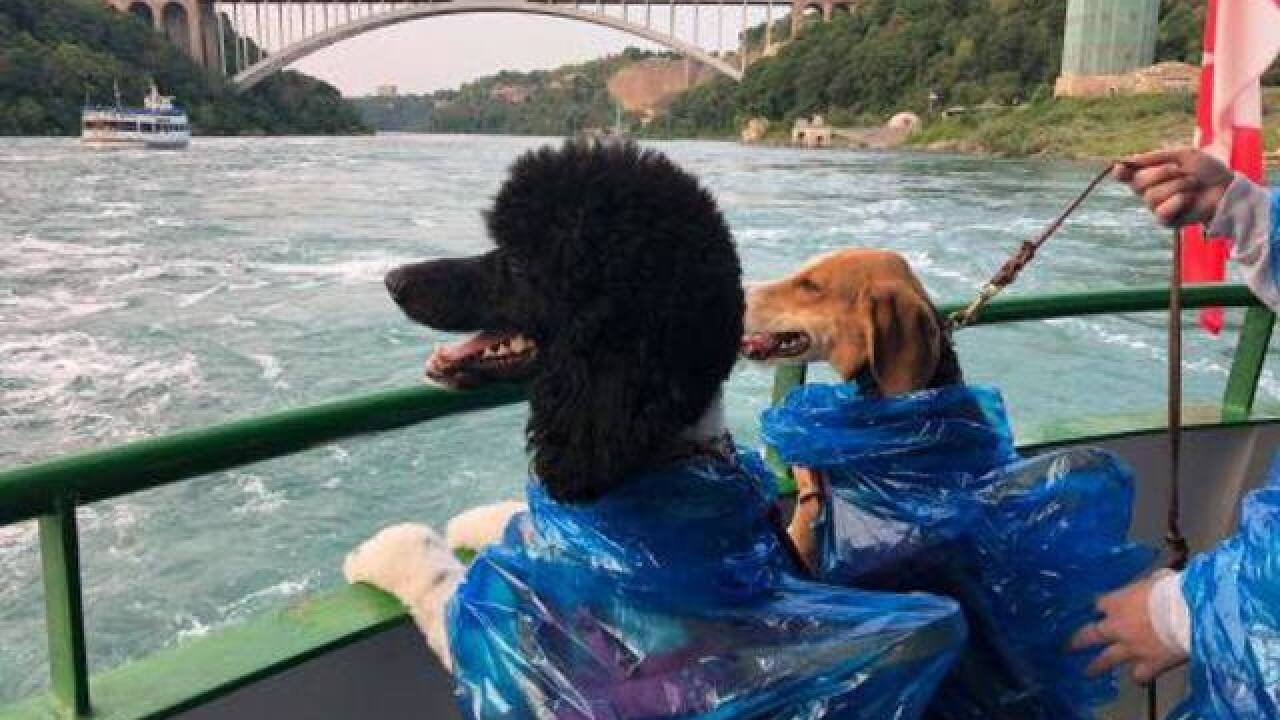 Service dogs enjoy Maid of the Mist