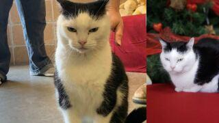 'World's Worst Cat' up for adoption at North Carolinashelter