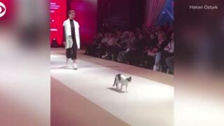 Video Extra: Cat walks fashion show