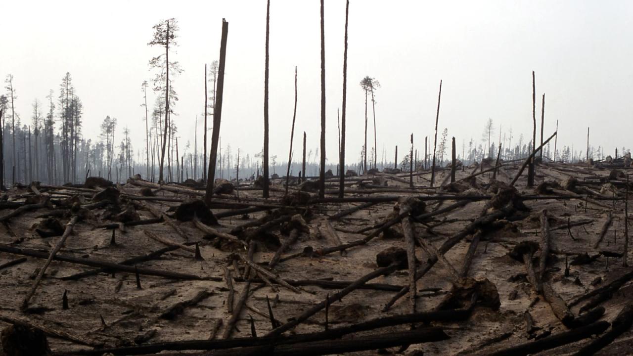 Fallen trees.png