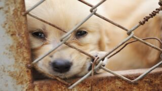 Animal Cruelty Is Now A Federal Felony