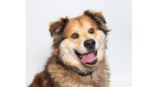 Pet Tales: Meet Rocky