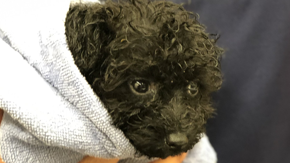 dog-adoption3.png