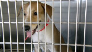 WPTV dog in cage Bahamas