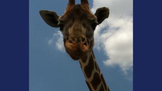 Aggieland Safari.png