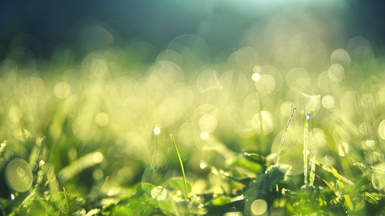 meadow-3743023_1280.jpg