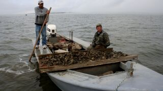 Fishermen oystering in Apalachicola Bay at Indian Pass, Fla.