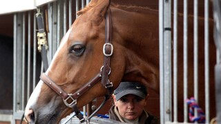 Kentucky hopes to benefit from renewed horse sales to China