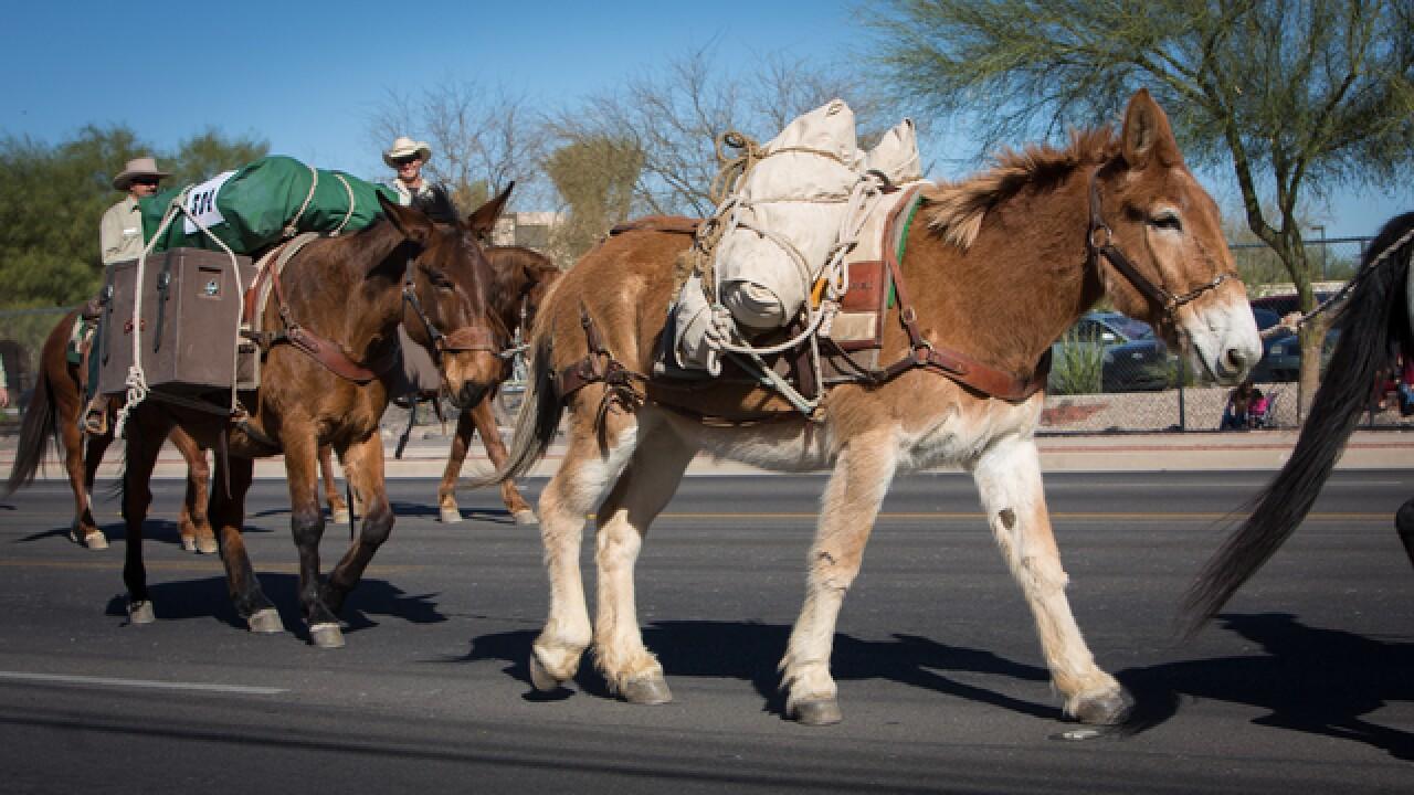 Tucson Rodeo Parade To Continue Despite Rain In The Forecast