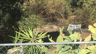 Body found after brush fire was put out in Santee
