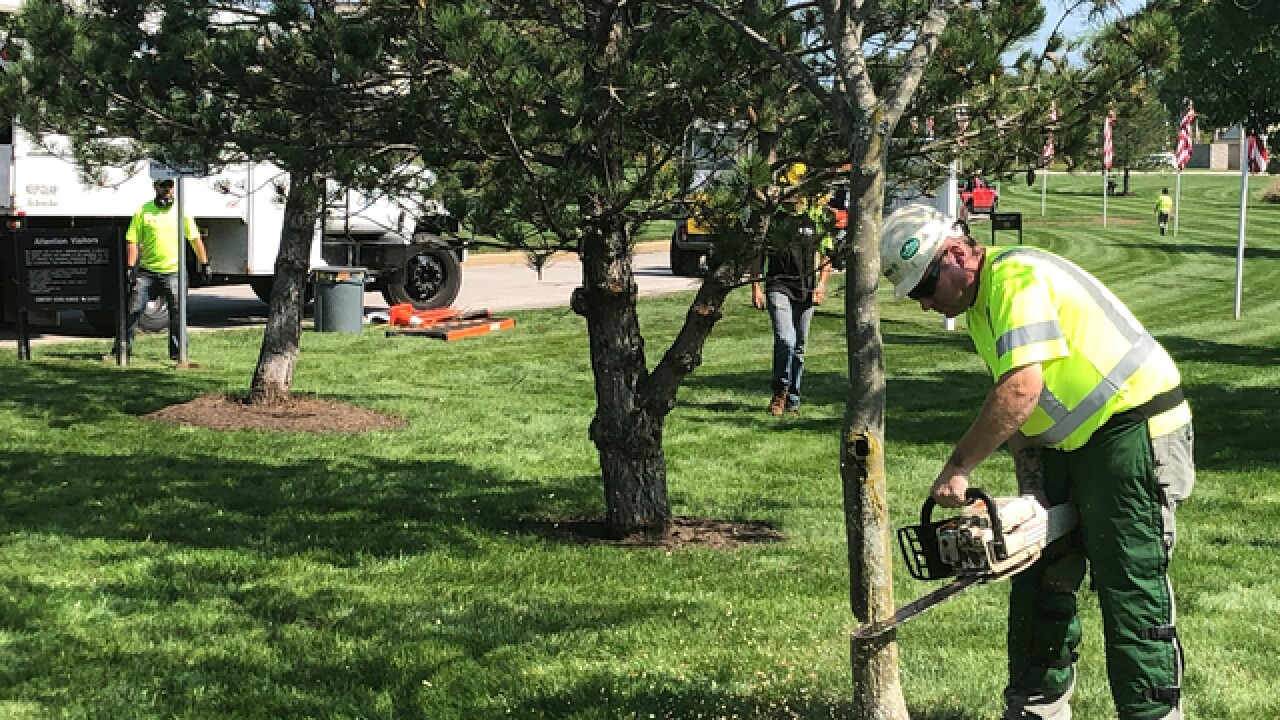 Arborists, veterans spruce up national cemetery