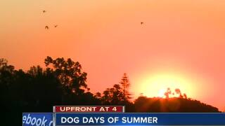 Written in the stars: the dog days of summer