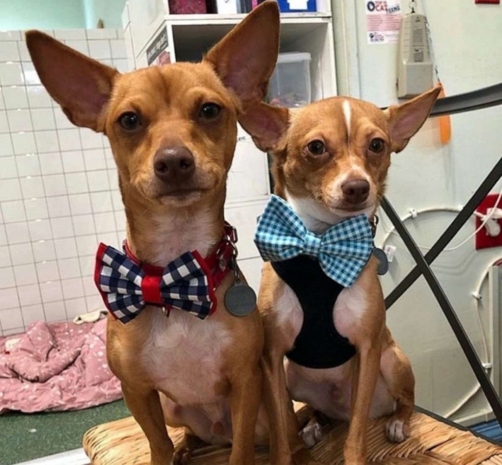 Sir Darius Brown says he hopes his bow ties will make shelter dogs look cute in their photos and help them find forever homes.