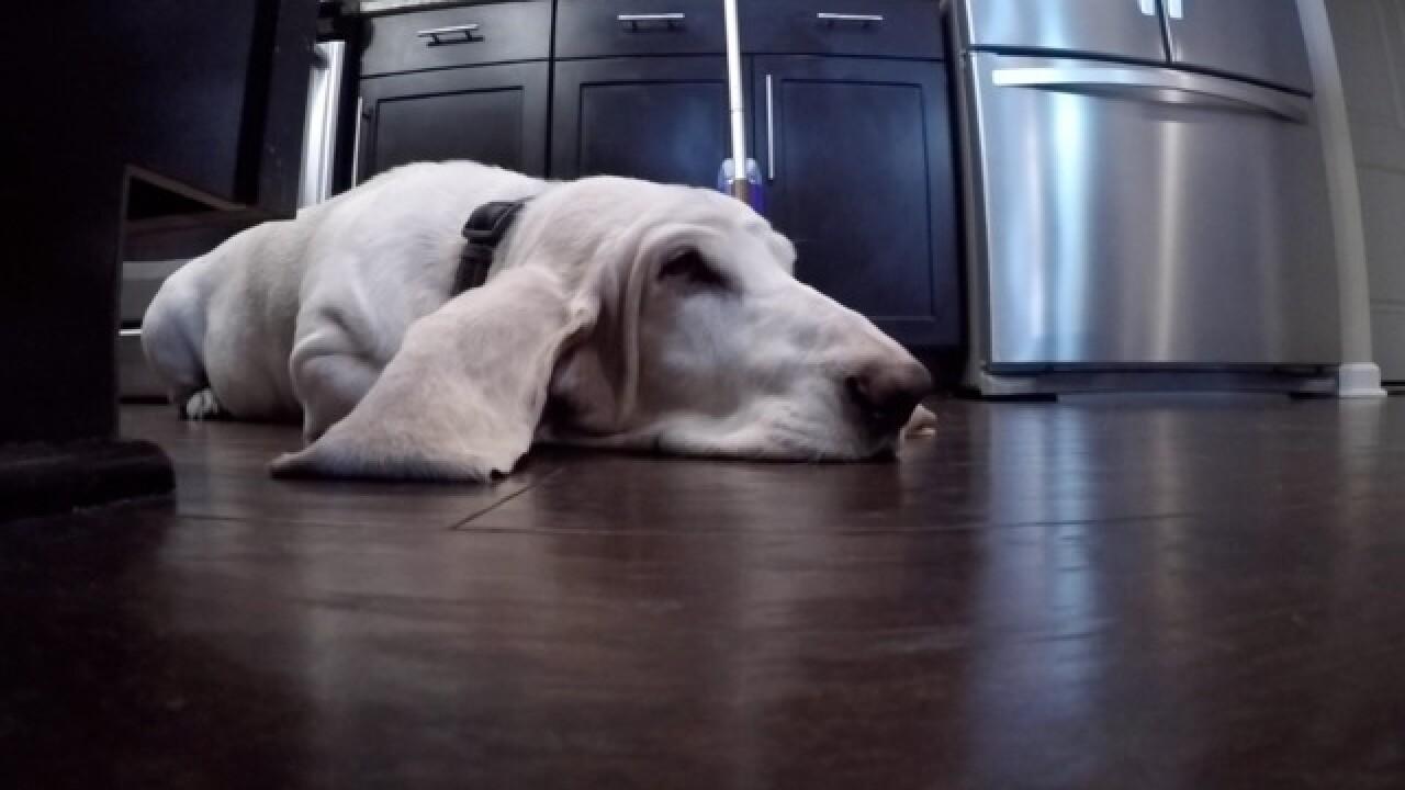 Vet debunks viral post concerning pet owners