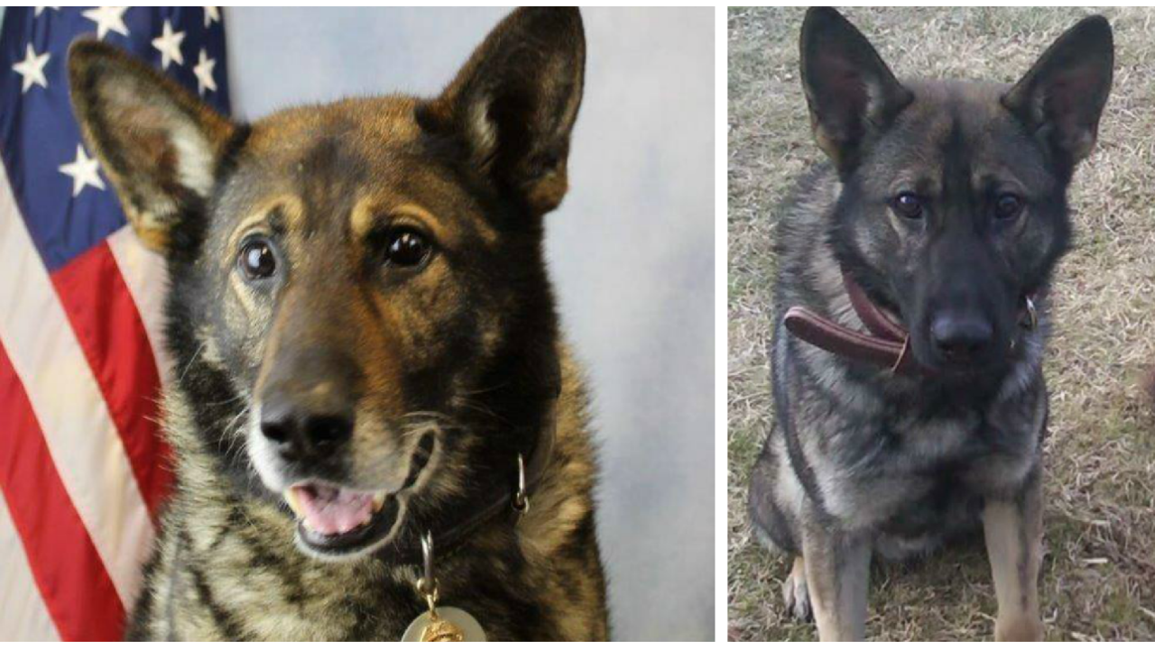 Hanover explosive/weapons detection K9 retires after 8 years ofservice