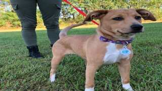 Acadiana Animal Aid needs volunteers for shelter run