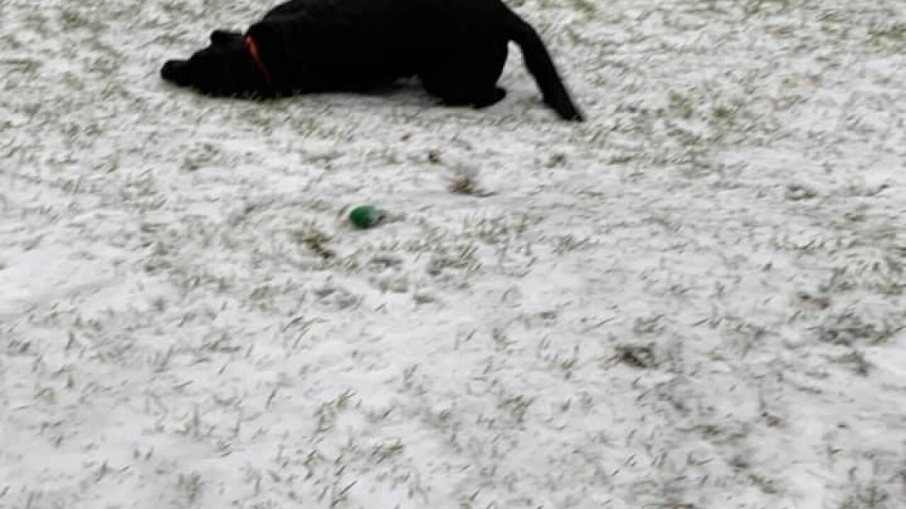 Dog Enjoying Snow - Courtesy Shanda Bennett via Facebook.jpg