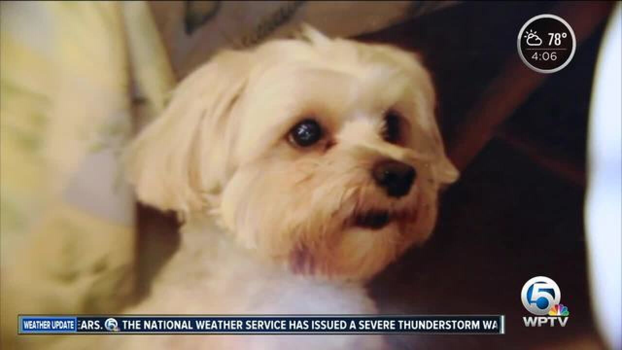 Time running out for PBG dog stolen from PetCo