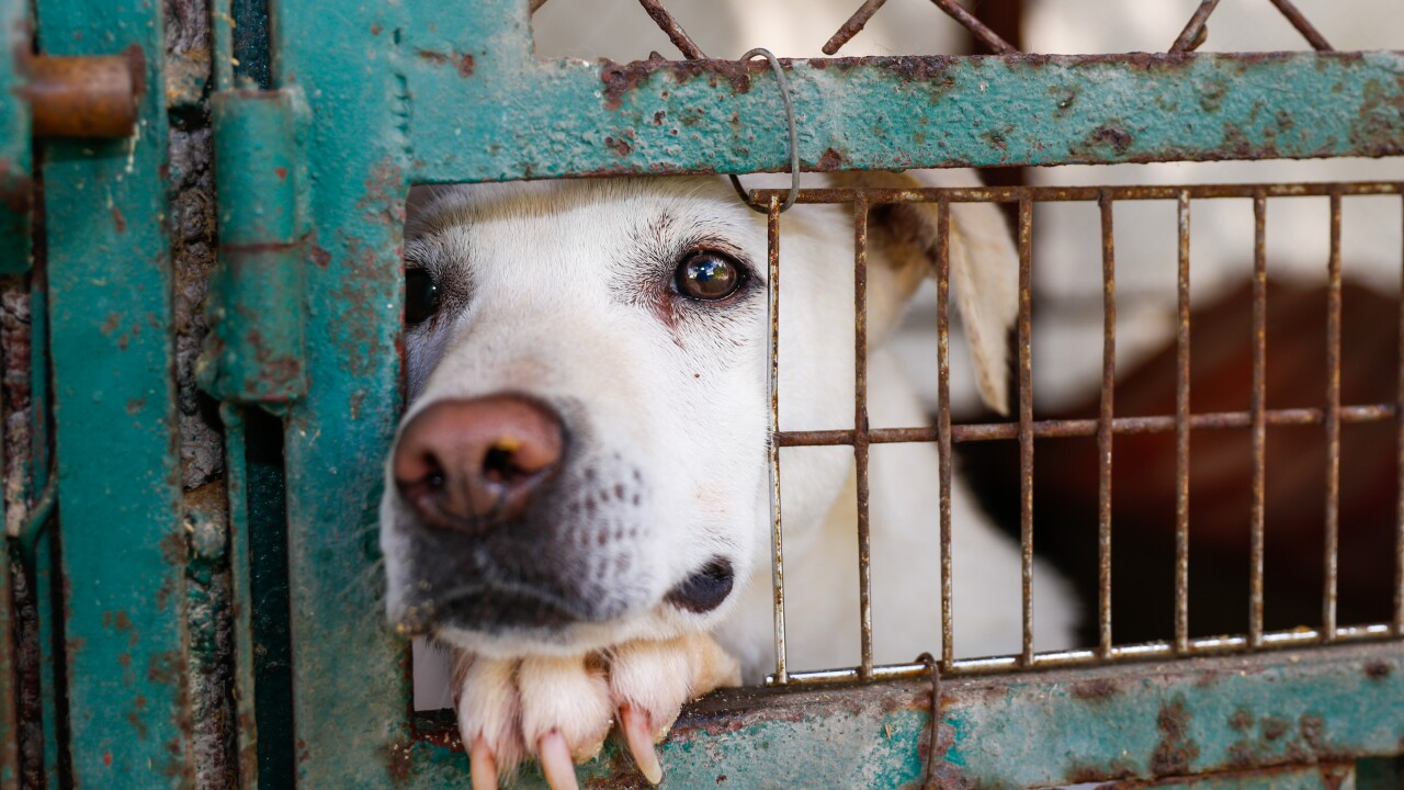 North Carolina bill would set up online registry for convicted animal abusers