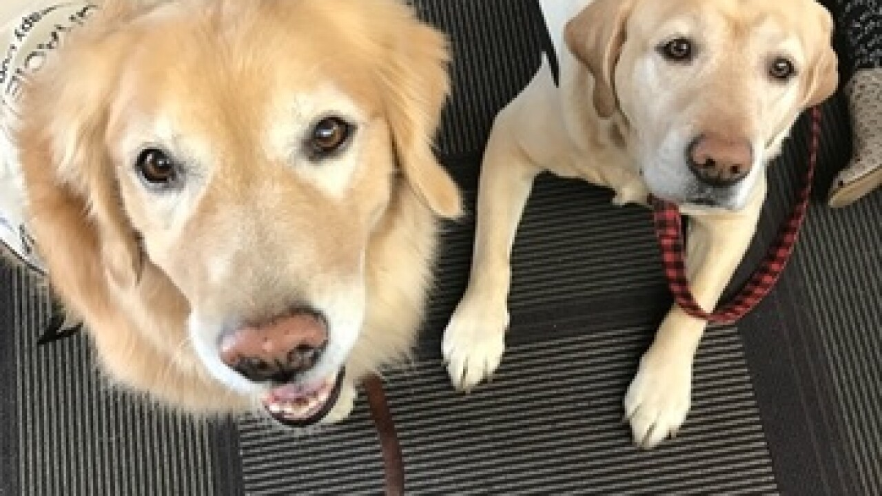 Therapy dogs help Ben Davis kids after tragedy