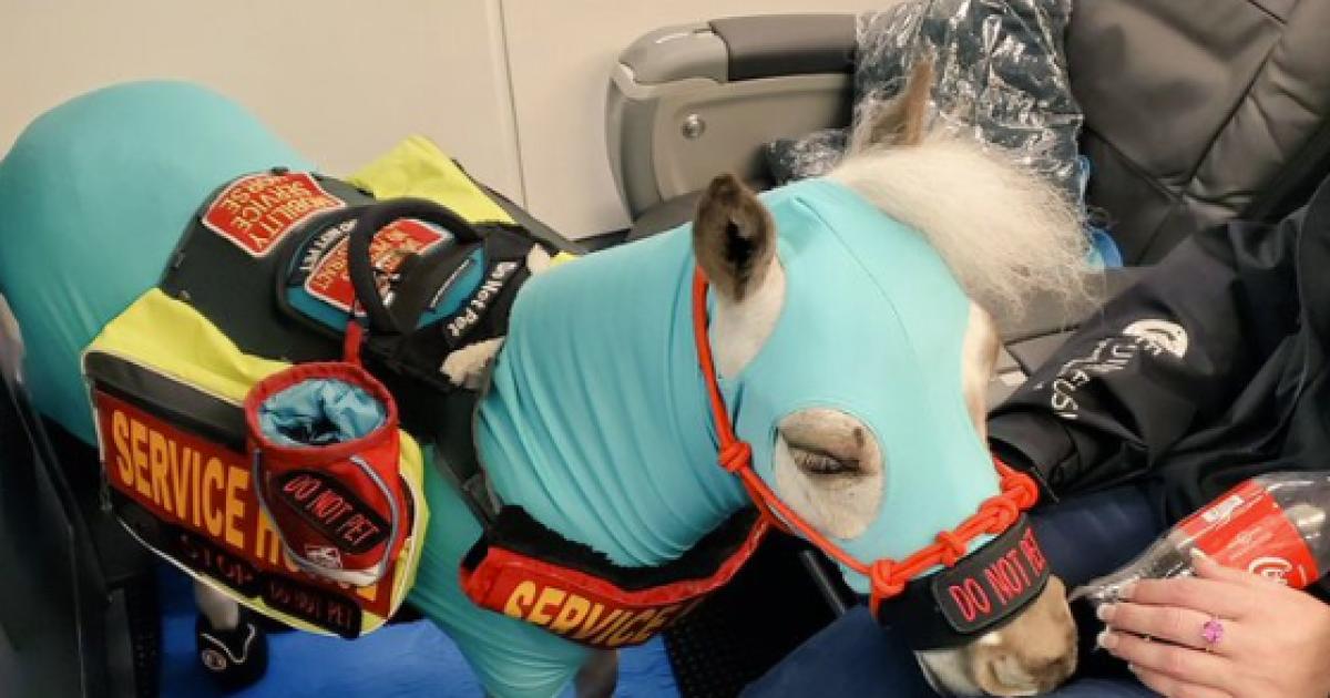 Miniature service horse successfully navigates GR airport