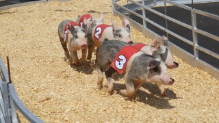 PHOTOS: Soo-ey! Wisconsin State Fair pig races