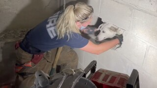 Gertie the dog trapped in wall in Cincinnati