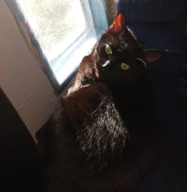 Black Cat 16.png
