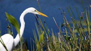 "Scientists: Everglades ""critically endangered"""