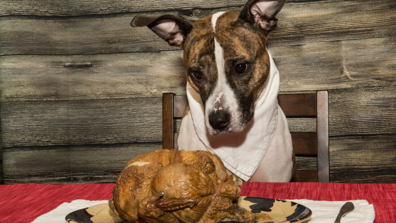 Food to keep away from your pets over theholidays