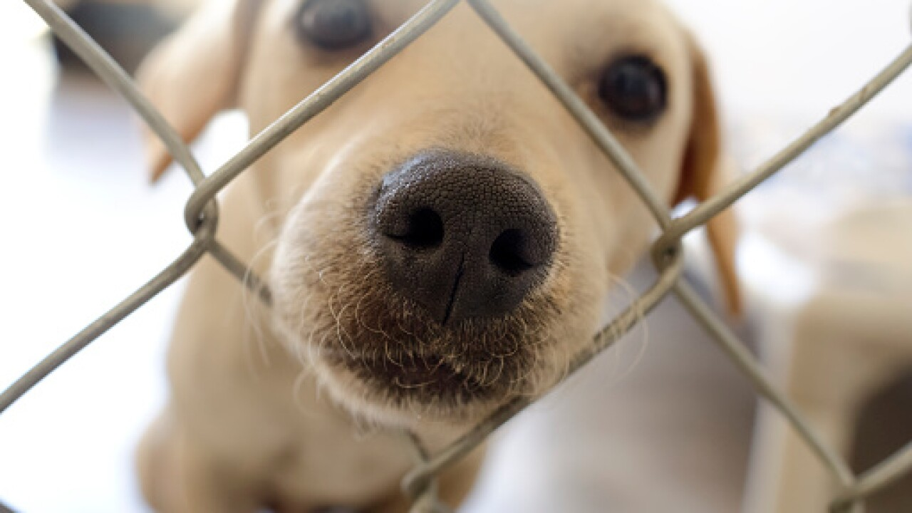 Portsmouth Humane Society looking for temporary fosters thisThanksgiving