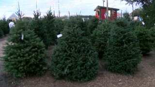 Spirit of Acadiana: Pollard's Christmas Tree Farm
