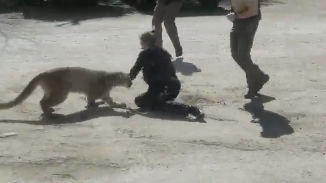 March 11 2020 mountain lion attack in Loveland