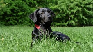 animal-black-breed-162149.jpg