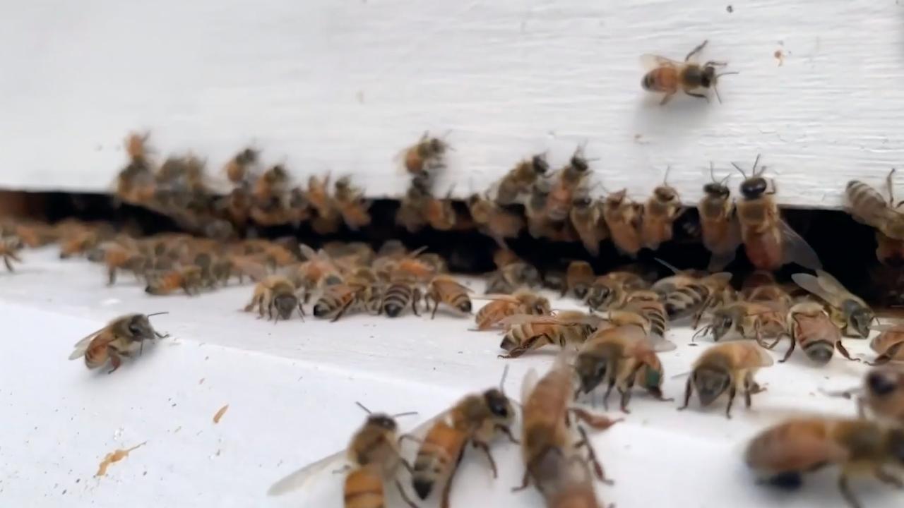 Beekeeping, farming programs help Veterans with PTSD symptoms