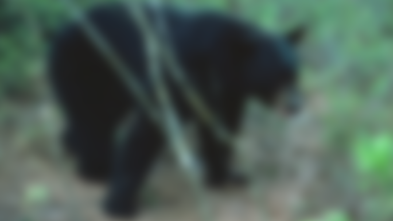 BEAR-SIGHTING-FLORIDA-GENERIC.png