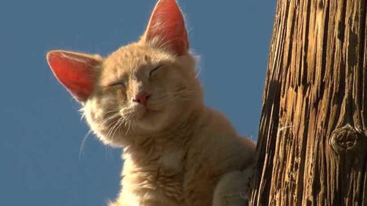 Again!? Cat stuck on Phoenix pole