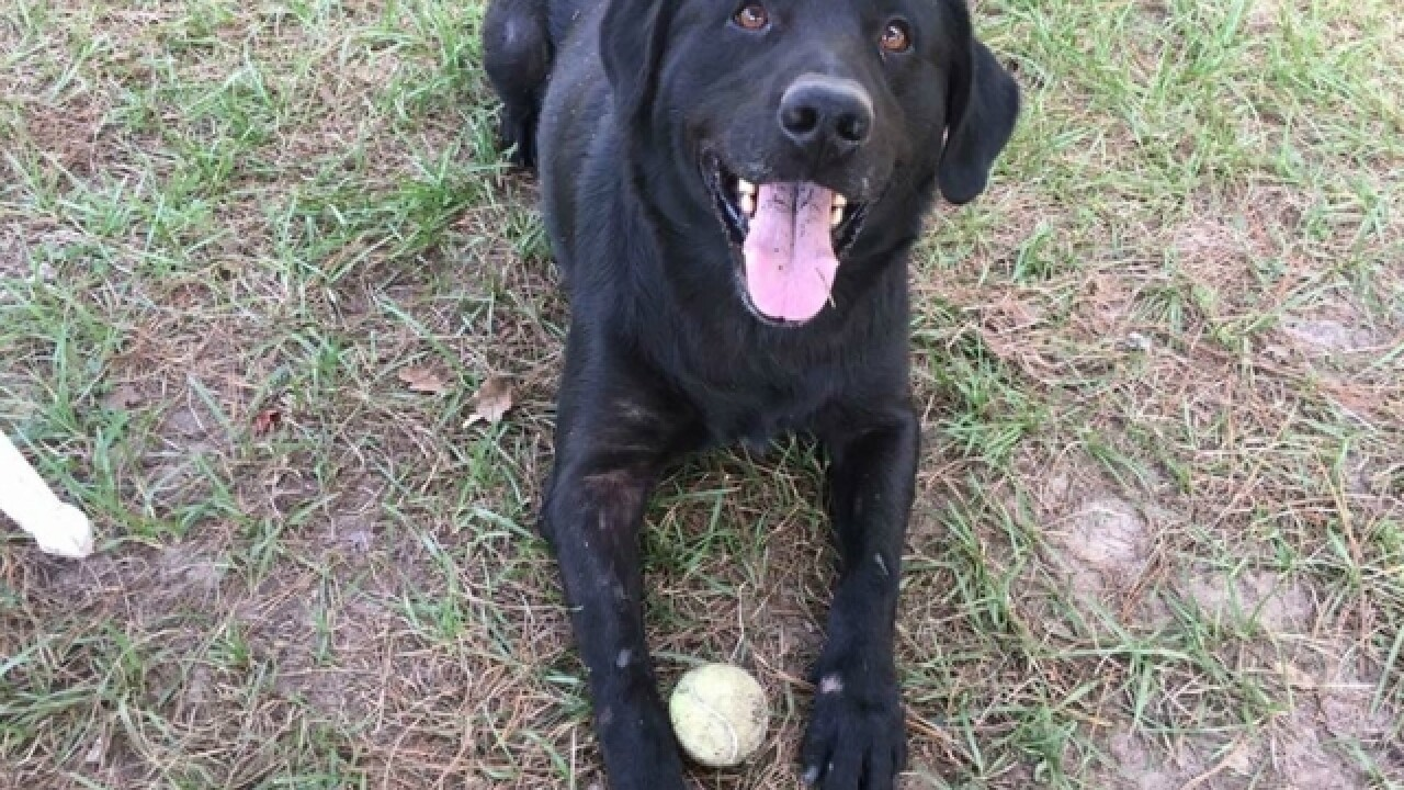 Pet of the week: Keiton loves to play