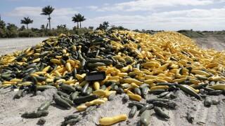 Virus Outbreak Florida Crops