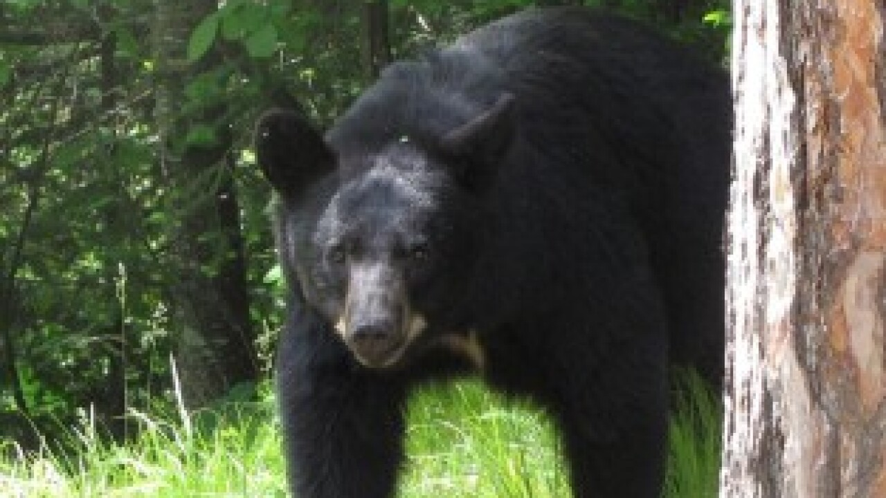 State DNR changes bear policy for first time since about 1980