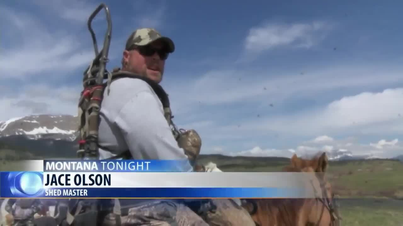Sun River WMA opens to antler shed hunters