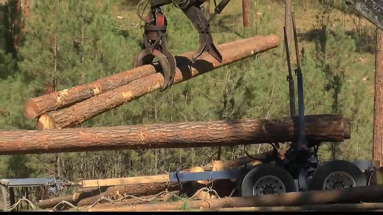 Timber Sale Logging