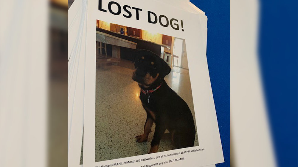 lost-dog.png