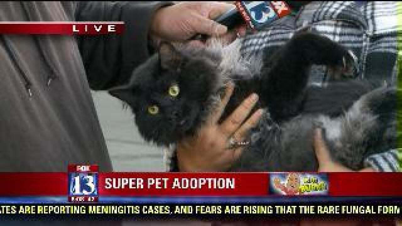 CAWS presents cats up for adoption