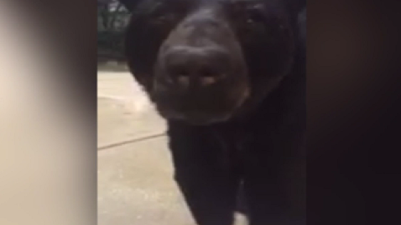 WATCH: Fla. woman has dangerously close encounter with bear