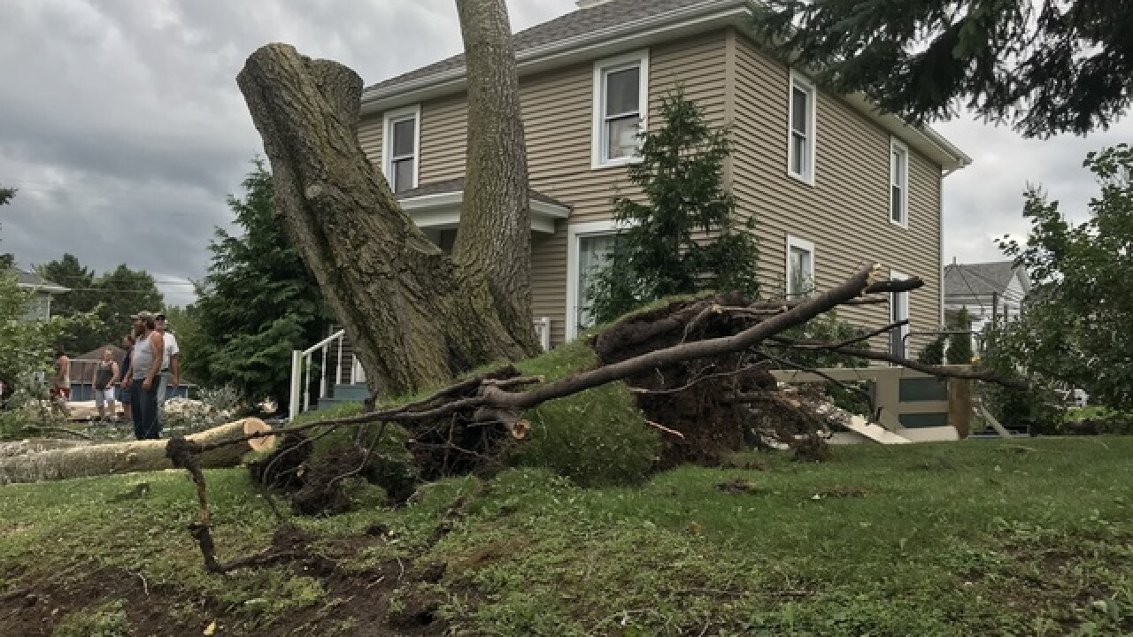 Storms knock down hundreds of trees in Cascade