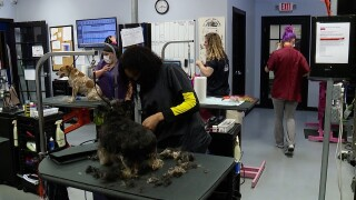 the grooming project