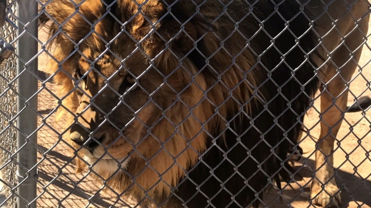 Non-profit wants to build new zoo in Las Vegas